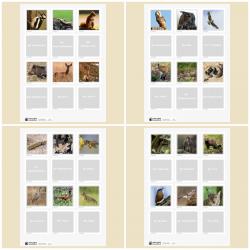 Lebensraum Wald: Waldtier-Memory