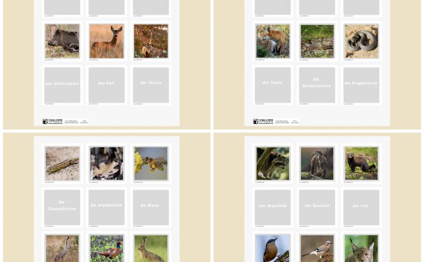Wir lernen Waldtiere kennen – Ein Memory mit 24 Kartenpaaren