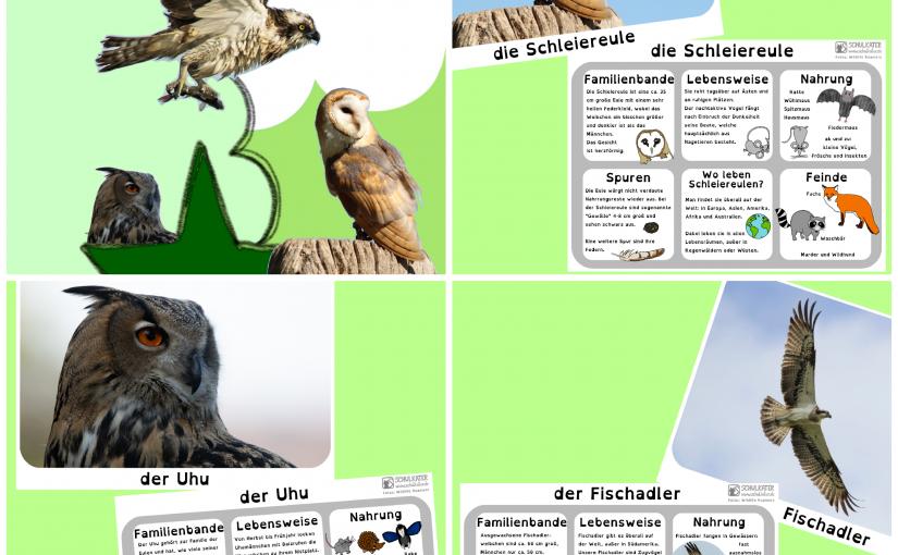 Waldvögel und bald wieder mehr Mathe, Deutsch, Englisch und Kunst