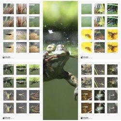 Lebensraum Teich: Froschmemory