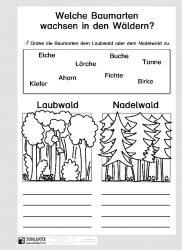 Arbeitsblatt Baumarten Blog Bildung Leben Mit
