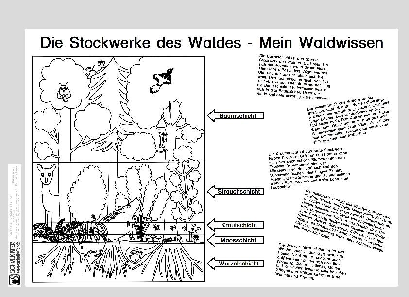 Wissensblatt Die Stockwerke Des Waldes Mein Waldwissen