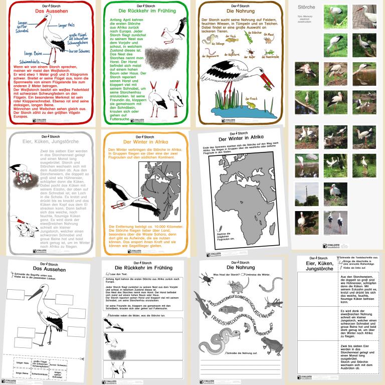 Lebensraum Teich: Der Storch