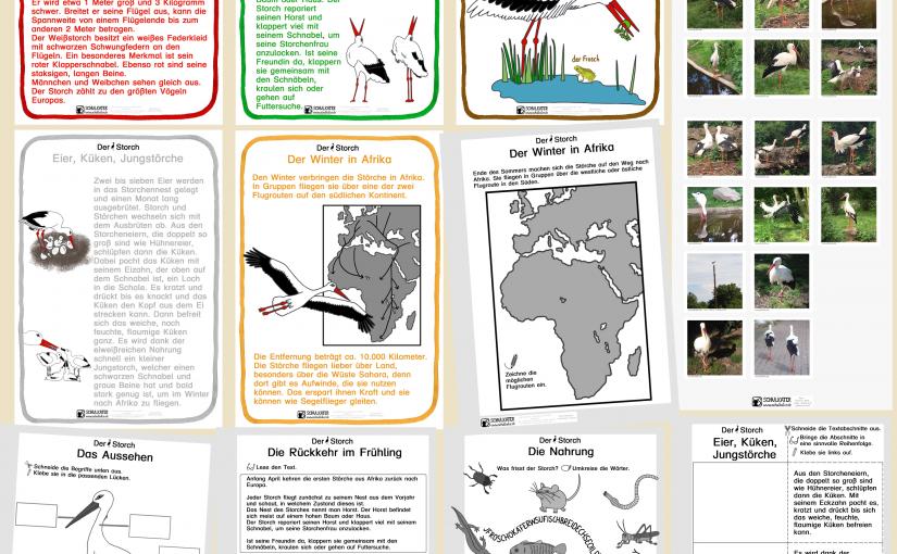 Unterrichtsmaterialien zum Storch (Lebensraum Teich: Klasse 3)