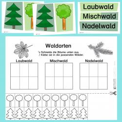 Lebensraum Wald: Waldarten