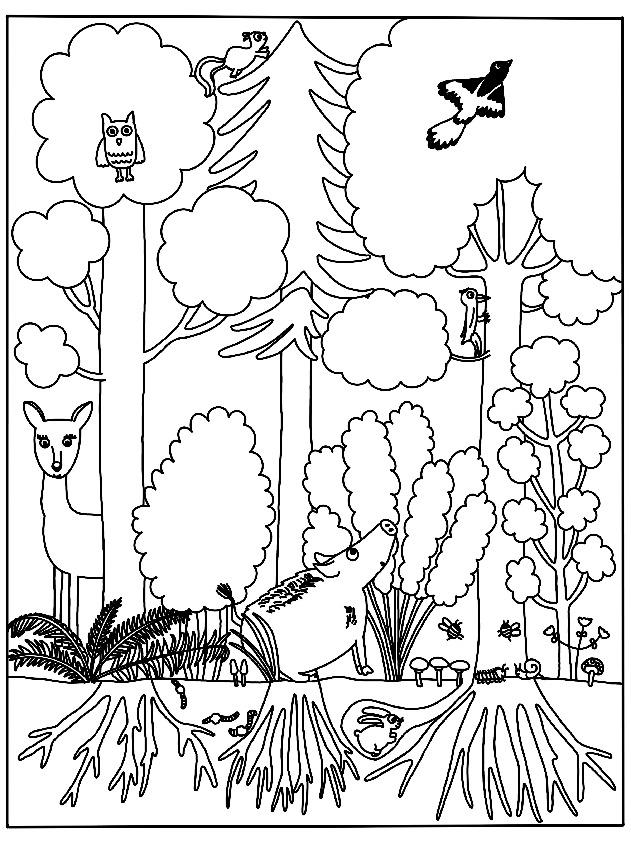 Ausmalbilder Stockwerke Des Waldes Blog Bildung Leben