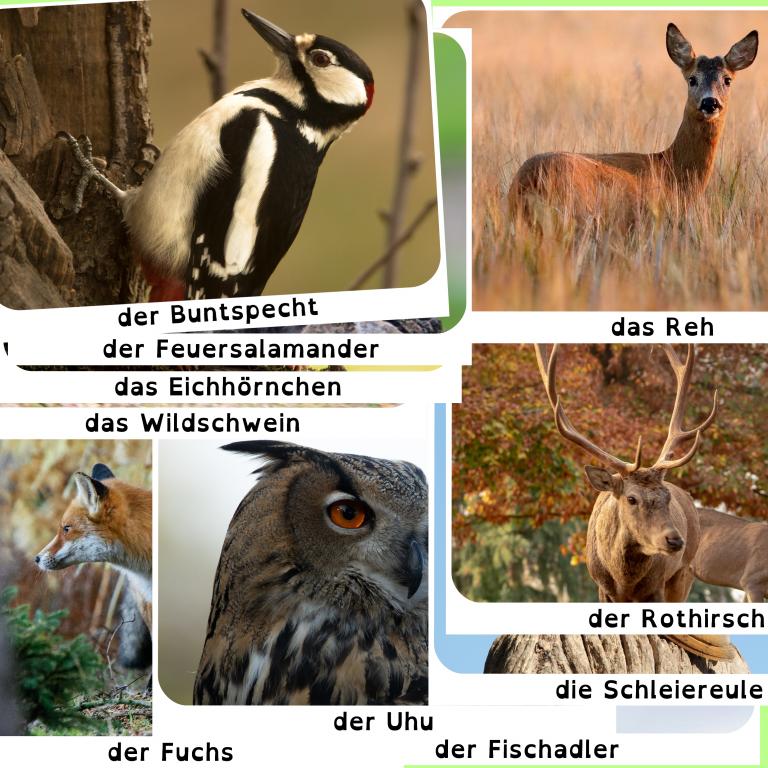 Lebensraum Wald: Waldtierkartei